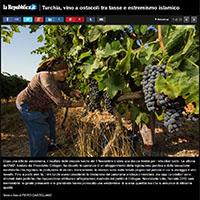 Winemaking in Turkey