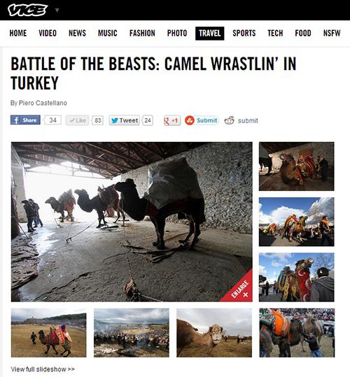 BATTLE OF THE BEASTS: CAMEL WRASTLIN' IN TURKEY
